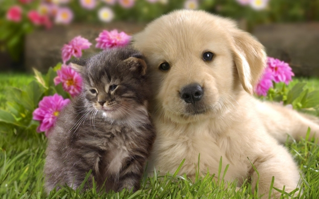 kitten and puppy in flowers